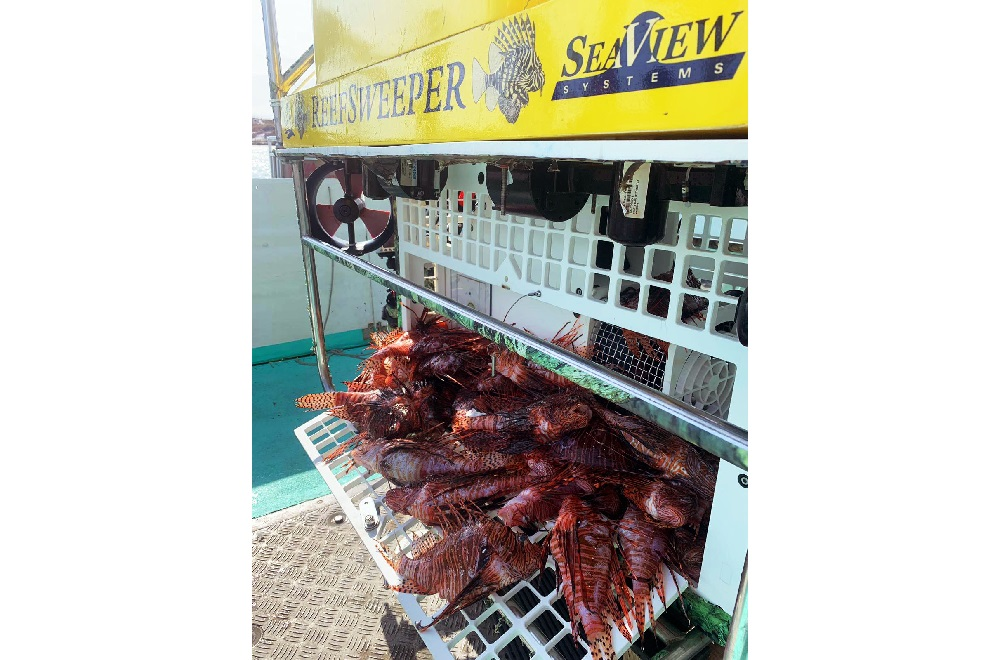 SeaView Systems' Reefsweeper, a lionfish catching robotic remote operated vehicle (ROV), is shown with a load full of caught Lionfish.